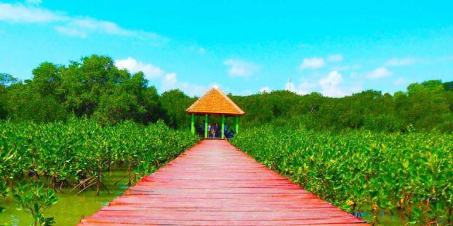 jembatan-merah-hutan-mangrove-rembang.jpg